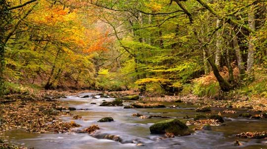 River Teign through Fingle Woods