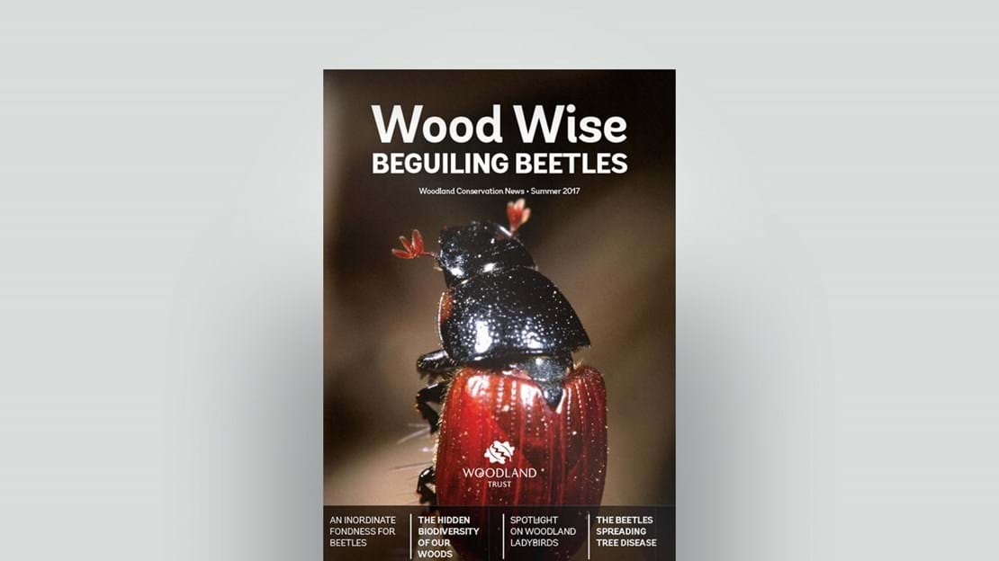 Cover of Wood Wise Summer 2017 - beguiling beetles