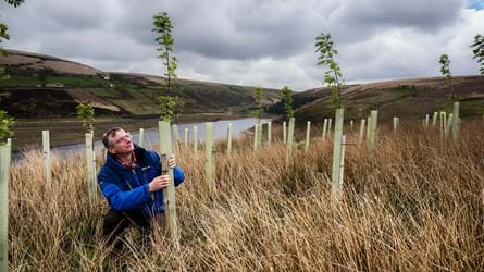 Man securing sapling in protection tube with lake and hills in the background