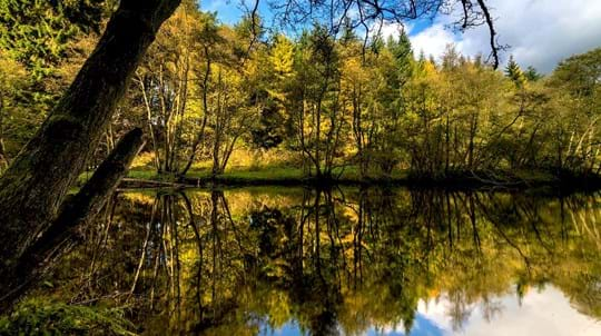 Autumn trees reflected in water, Bilton Beck and Rudding Bottoms