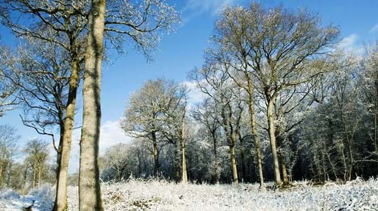 Snowy woodland, Brede High Woods