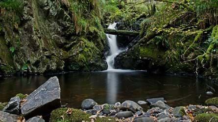 A small waterfall tumbles into a still pool surrounded by mossy rocks