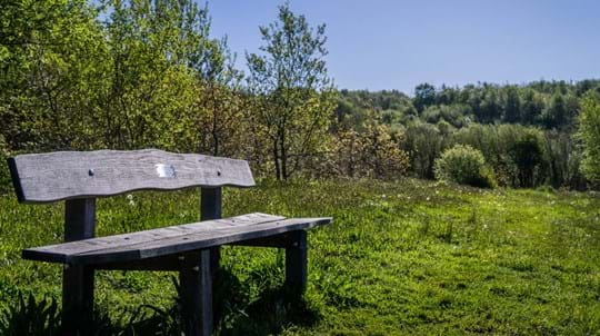Dedication bench at Watkins Wood