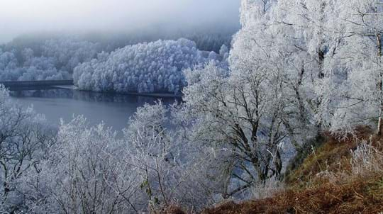 Frost-covered trees around lake, Glen Finglas