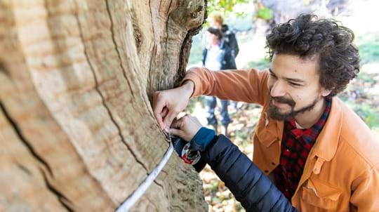 A man holds a tape measure around the trunk of an ancient tree