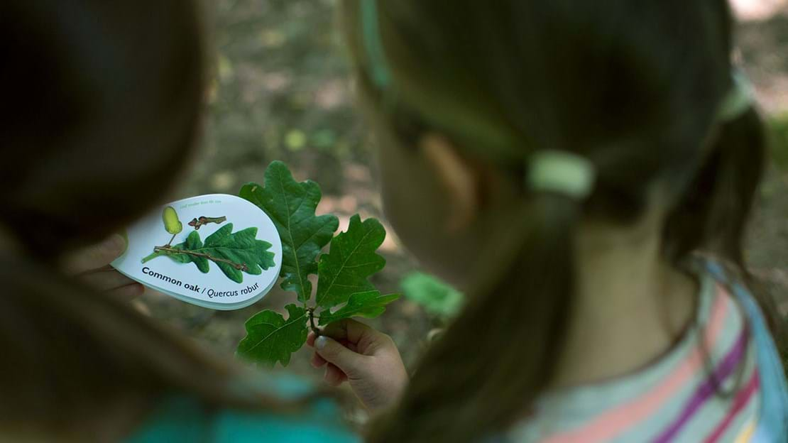 Two girls identifying leaves with a leaf swatch book