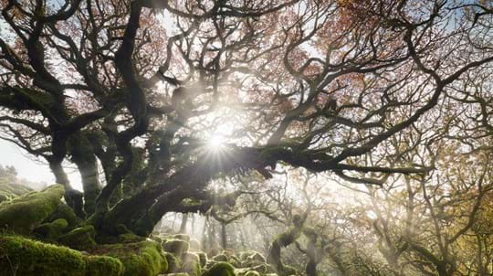 Sunlight beams through the gnarly branches of an old tree