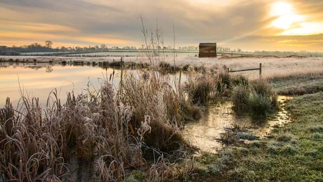 Looking through frosty bullrushes to lake and bird observatory