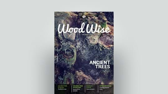 Cover of Wood Wise Spring 2014 - ancient trees