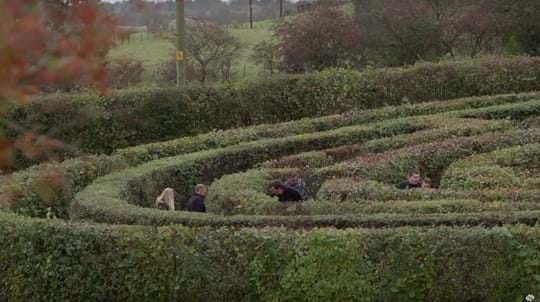 Six people just visible in different areas of a leafy hedge maze