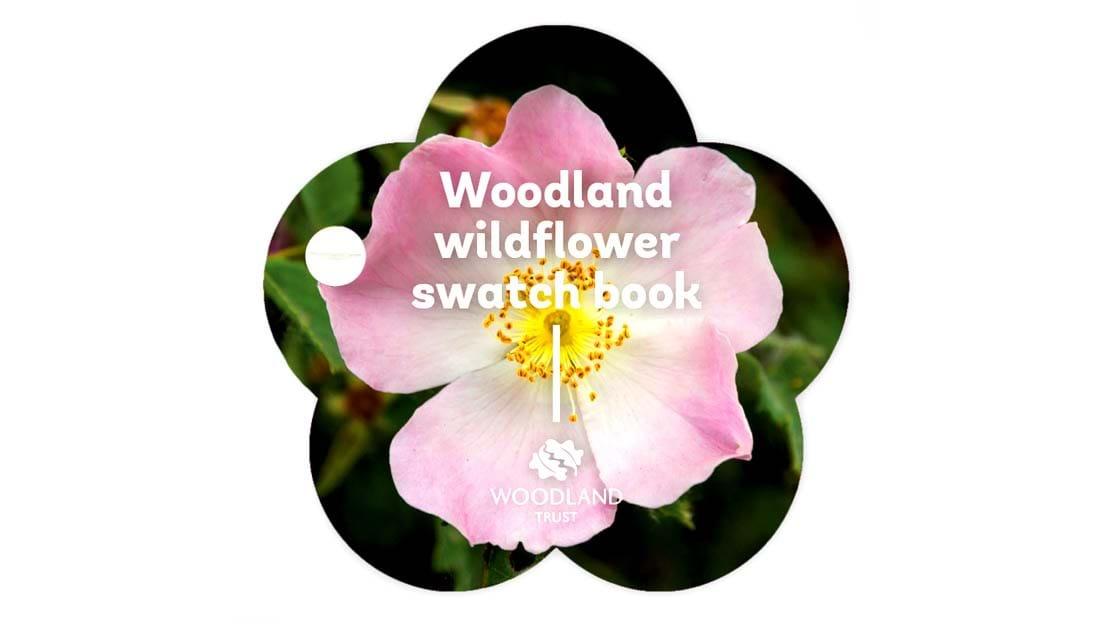 wildflower swatch book cover