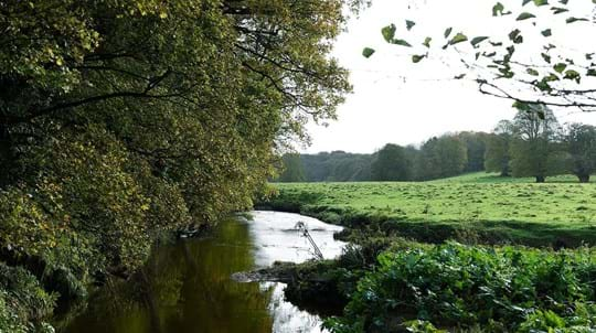 River between wood and meadow, Cabin Wood