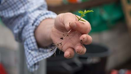Seedling held between man's fingers