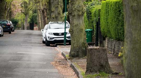 A residential street lined by parked cars and trees. One of the trees has been cut to leave only a stump