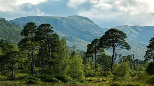 Landscape of lush Caledonian woodland at Loch Archaig with mountains in background