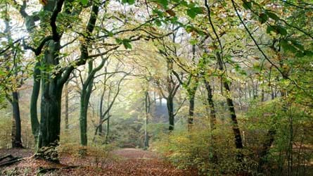 Woodland at Smithills