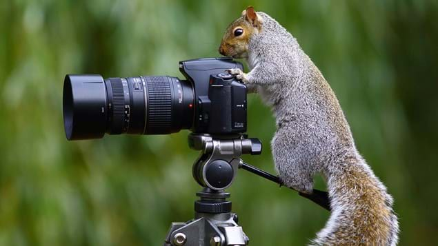 grey squirrel behind a camera