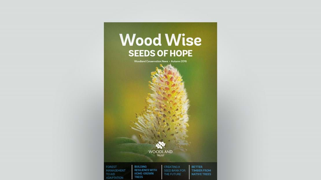 Cover of Wood Wise Autumn 2016  - seeds of hope