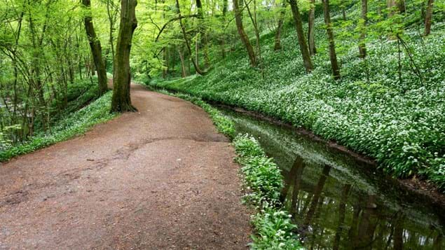 Path through Skipton Castle Woods in spring