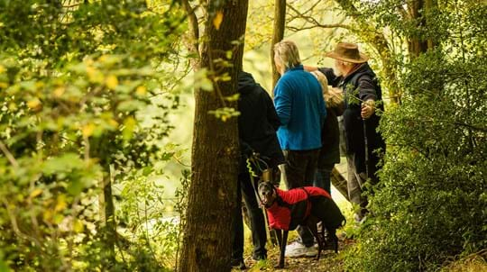 People walking dog along a wooded lane
