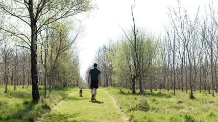 A man in shorts and T-shirt walking a dog along a path in young woodland