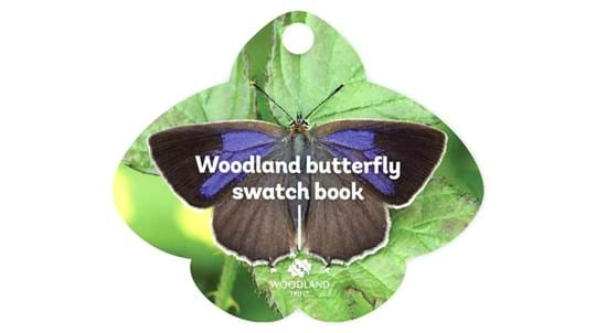 Woodland butterfly swatch book