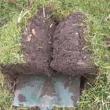 Two pieces of turf laid on a spade that has been used to lift them