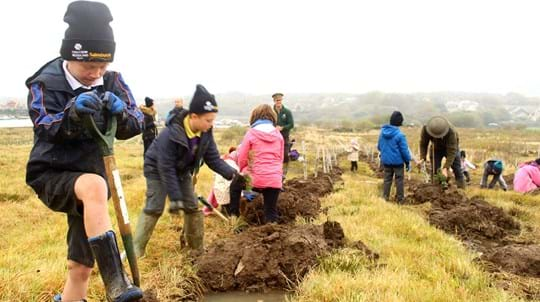 Welsh children planting saplings