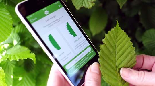 Woodland Trust tree identification app with mobile phone