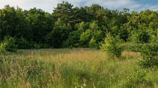 Grassland meadow next to woodland at Hargate Wood
