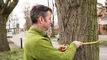 Tree officer in Wrexham measuring a street tree