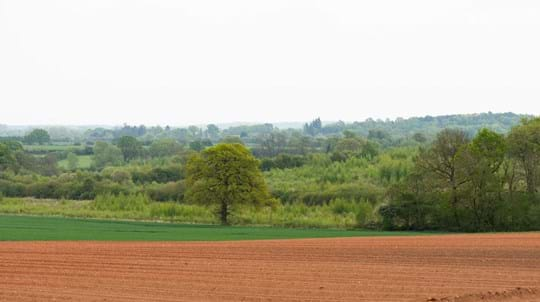 Long distance view of trees and woods among farmland