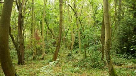 South Cubbington woodland under threat from HS2