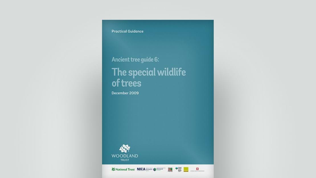 Wildlife of ancient trees, December 2009 guide