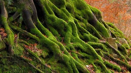Roots of a tree covered in moss
