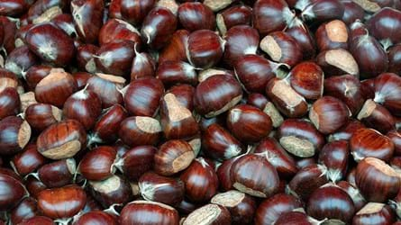 Sweet chestnuts piled up