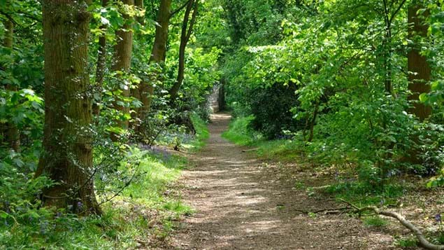 Green path through Big Wood, Runcorn