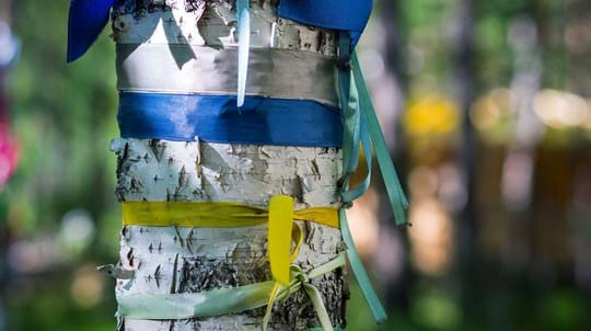 Blue and yellow ribbons wrapped around a birch tree trunk