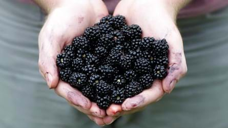 Blackberries in hands