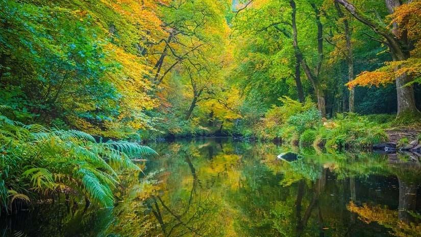 Autumnal trees reflected in river, Fingle Woods