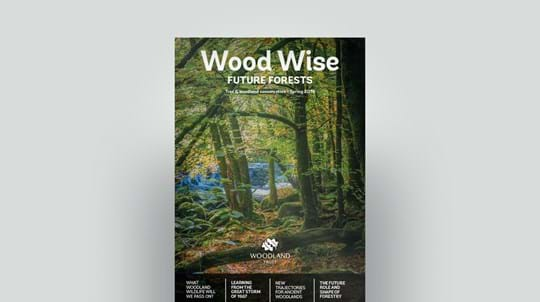 Cover of Wood Wise Spring 2019 - future forests