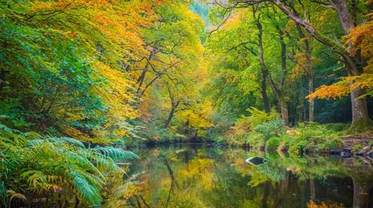 fingle woods in autumn
