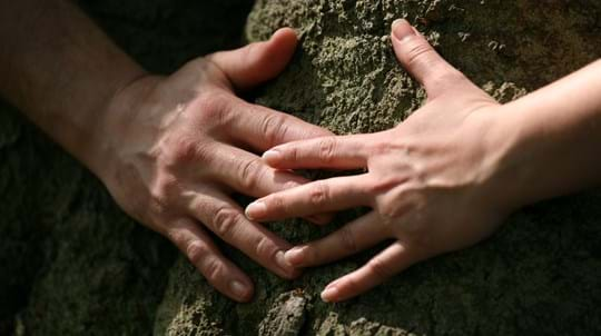 Close up of two hands meeting against a tree trunk
