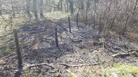 Charred land around a wire fence in a small woodland clearing