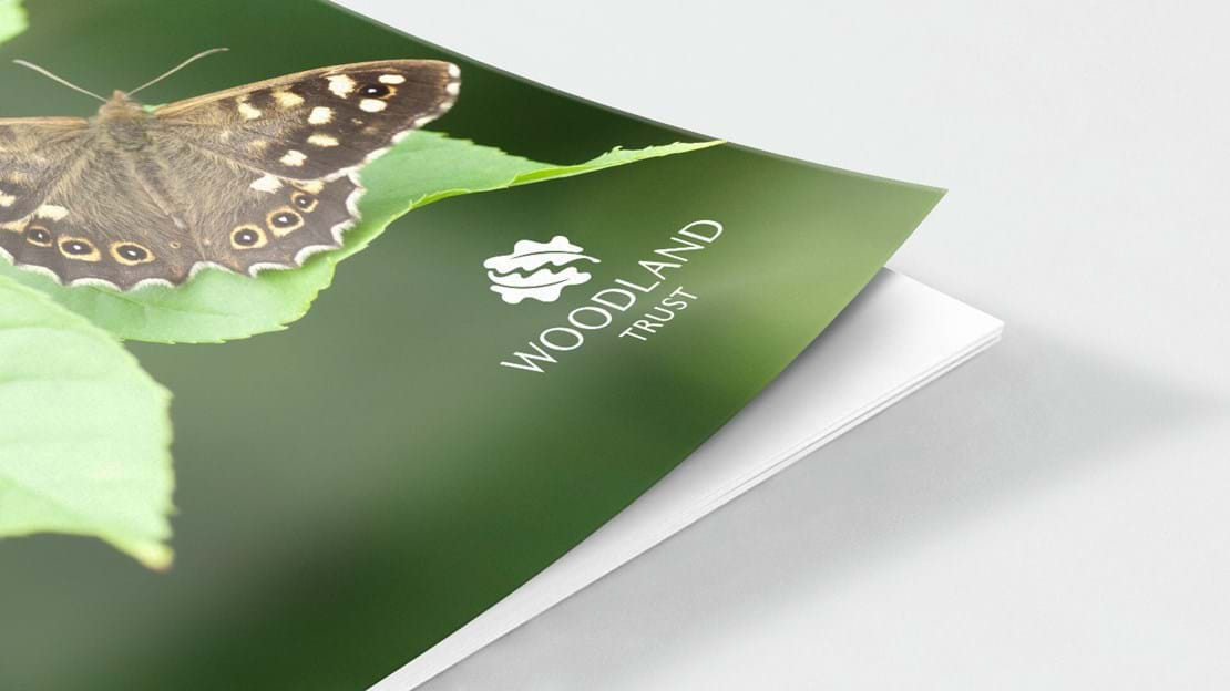 Speckled wood butterfly document cover