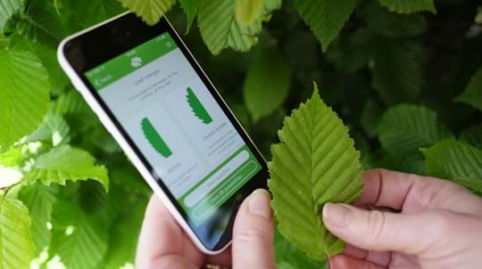 Woodland Trust Tree ID App