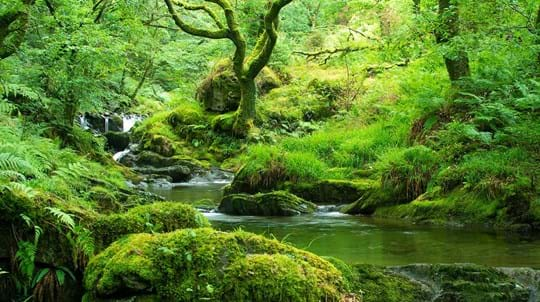 Stream flowing through mossy woodland, Coed Nant Gwernol and Coed Hendrewallog