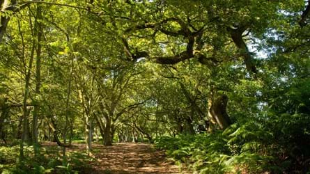 A footpath through a bright, leafy wood