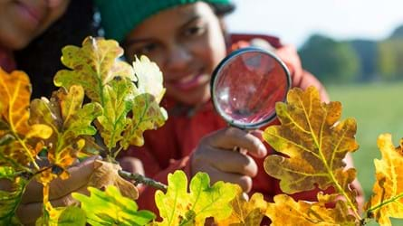 Child looking at autumn leaves with a magnifying glass
