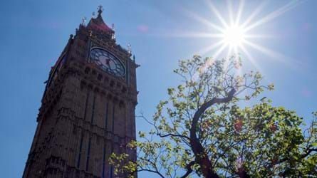 Tree outside of the Houses of Parliament with sun shining through